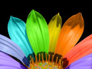 rainbow-flower-1528089